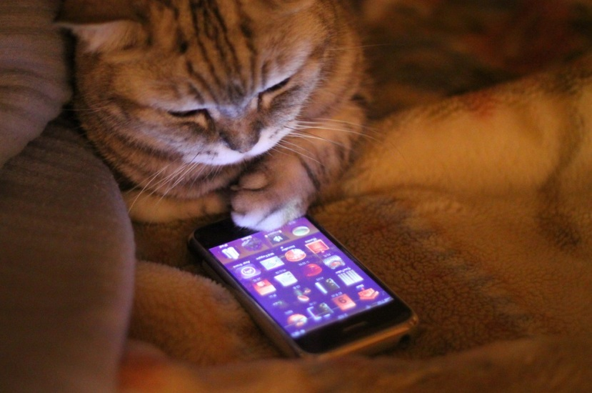 cat_iphone